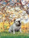 SPRING<br>& White English Bulldog