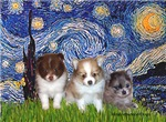 STARRY NIGHT<br>& 3 Pomeranian Puppies
