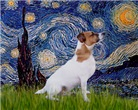 STARRY NIGHT <br>& Jack Russell Terrier