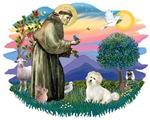 St. Francis #2 &<br>Coton De Tulear