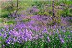 Wildflowers South Dakota