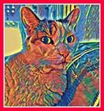 Doba the Cat