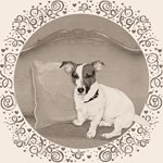 The Sophisticated JRT (antique)