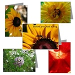 Greeting cards, Postcards, and Note Cards