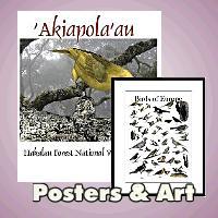 Calendars, Posters & Art