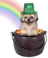 St. Patrick's Day Cards & Products