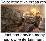 Attractive Creatures
