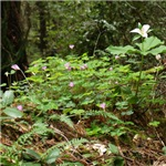 Redwood Forest Flowers