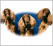 Dog Posters & Dog Pictures