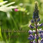 Wilde NW ~flowers