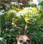 Bulldog Bird Dog