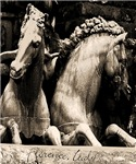 Horses of Florence