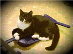 Kitty With Dustpan