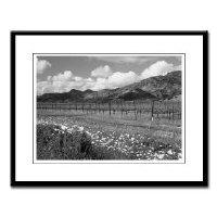 Wine Country Gifts Black + White Prints