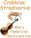 Fiddler Crab Strad