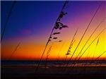 Sea Oats at Sunrise on Daytona Beach