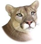 Precious Panther