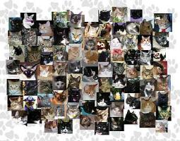 Cat Blogosphere Goodies