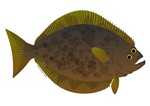 Barndoor Halibut