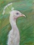 Princess Peacock 2