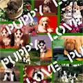 Puppy Love Collage T-shirts & Gifts