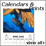 Calendars & Prints