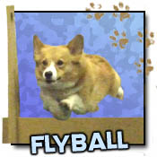Flyball T-Shirts & Gifts