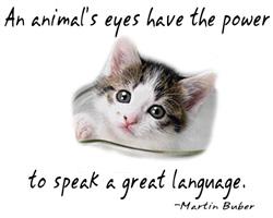 An Animal's Eyes
