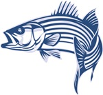 Graphic Striped Bass
