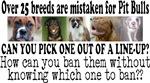 Doggie Line-up