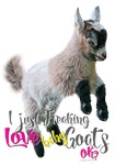 I Just Freaking Love Baby Goats Pygmy baby | a Get
