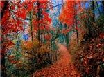 Autumn Flames Trail