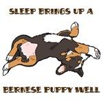 Sleeping Bernese Mountain Dog Puppy