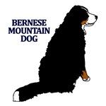 Sitting Bernese Mountain Dog
