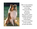 Sheltie Devotion