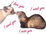 Cat and Ferret Love