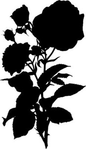 Black Rose Silhouette