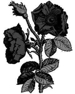 Gothic Black Roses
