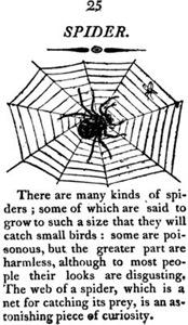 Vintage Spider Guide