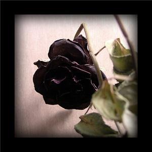 Gothic Dead Rose