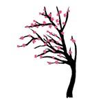 Japanese Cherry Blosson