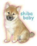 SHIBA BABY