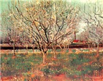 Orchard in Blossom, Plum Trees.