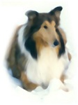 Collie_Watercolor Ruby