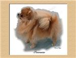 Pomeranian Watercolor Art