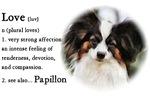 Papillon Love Is
