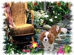 Cavalier King Charles Spaniel Art Gifts