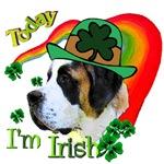 Today I'm Irish Saint Bernard