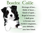 Border Collie Puppy Gifts