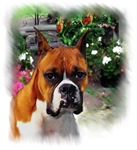 Boxer Dog  Art Gifts